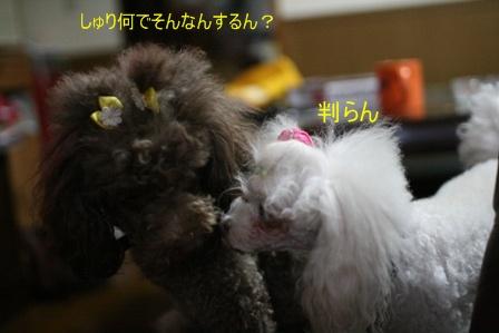 IMG_4468f.jpg