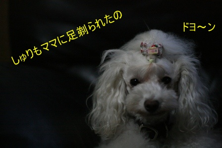 IMG_4920f.jpg
