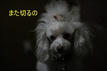IMG_4929f.jpg