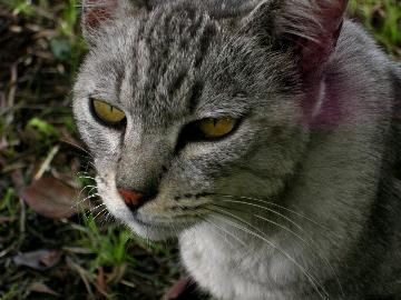CAT0808