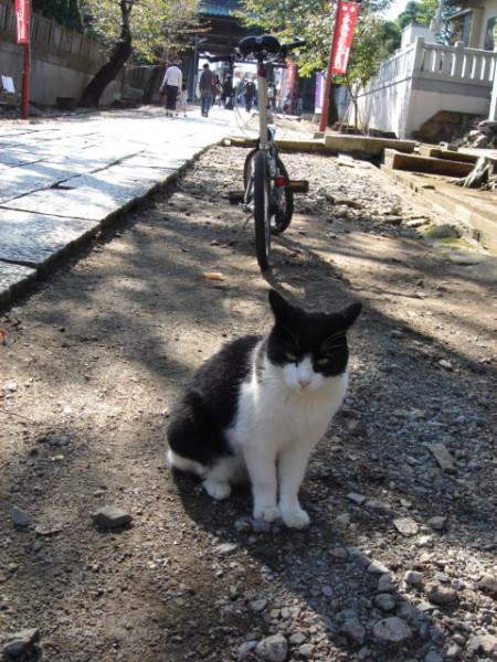 法華経寺の猫2