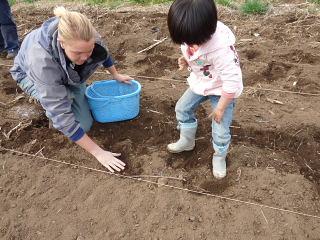 ジャガイモ植え1