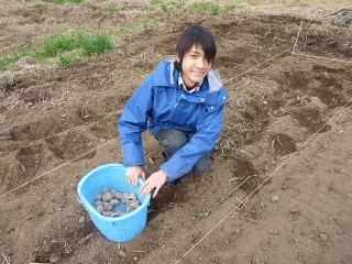 ジャガイモ植え2