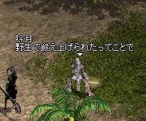 LinC0532.jpg