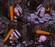 fox051206_13.jpg