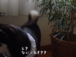 20070520192508.jpg