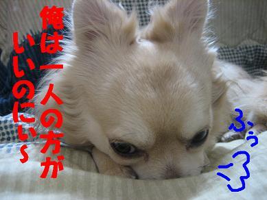 IMG_9917d.jpg