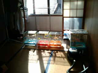 20081210104217.jpg