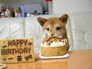 ケーキ、美味しい~♪