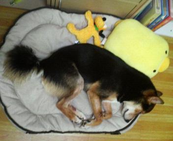 自分サイズで寝る、風太