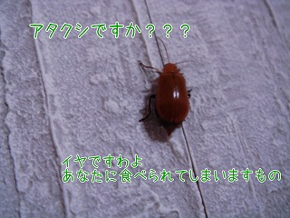 20081113 (3)