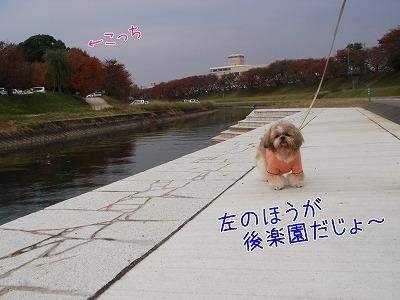 20081117.jpg