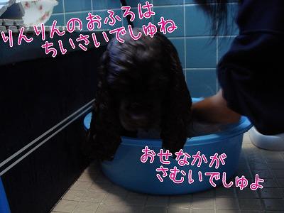 20081206 (3)