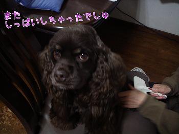 20081210 (1)