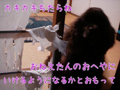 20081216 (1)