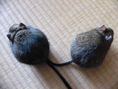 Wマウス。