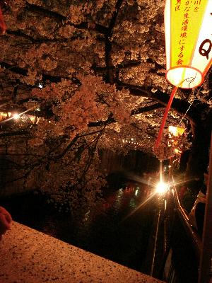 夜桜2009