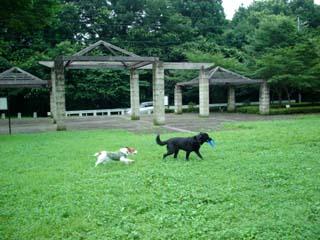長岡公園269