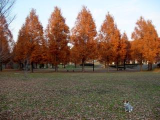 長岡公園450