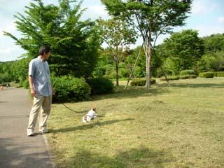 7長岡公園241
