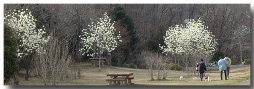 8長岡公園362