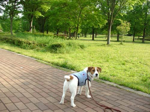 8長岡公園450