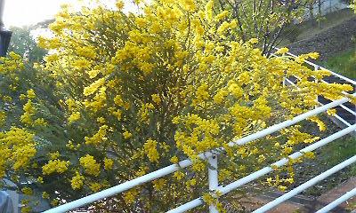 8草花木022