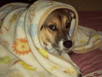タロウ毛布
