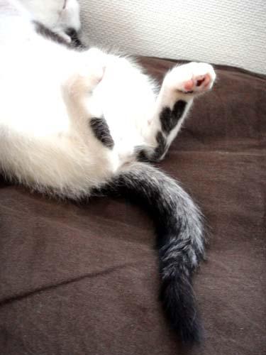 ハート柄の猫2