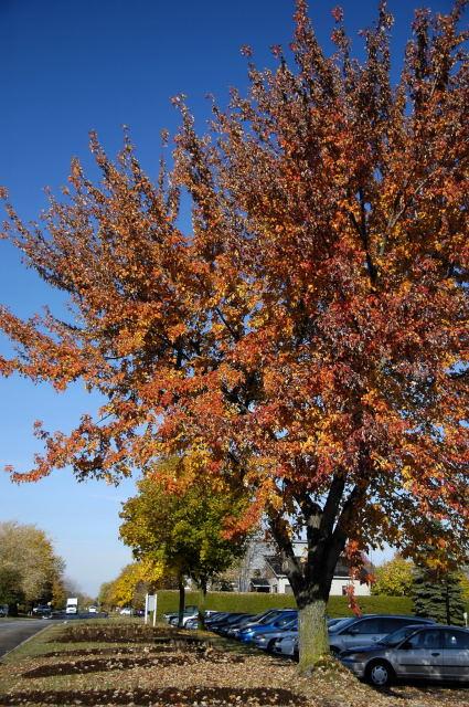 2008-10-26_23-15-12.jpg
