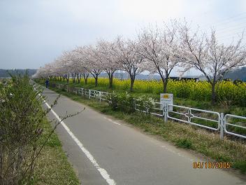 印旛沼サイクリングロード(千葉県)