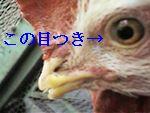 20050101015055.jpg