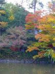 生島八島神社の紅葉