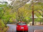 八重桜のある風景