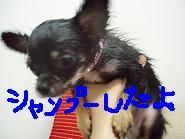 20060515222011.jpg