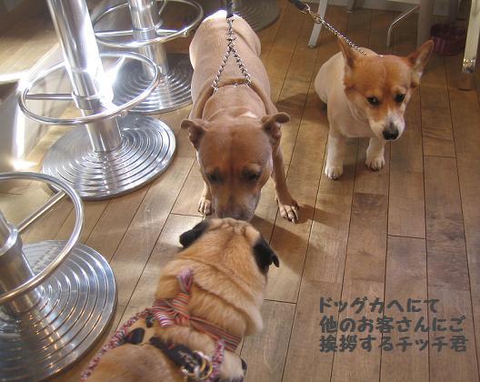 珍しい犬種のわんちゃんに遭遇・・・