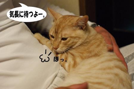 10_20090425194959.jpg