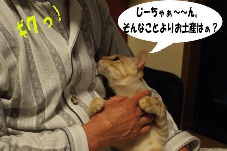 2_20090412132035.jpg