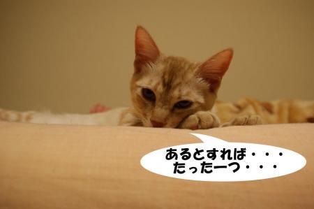 2_20090427195209.jpg
