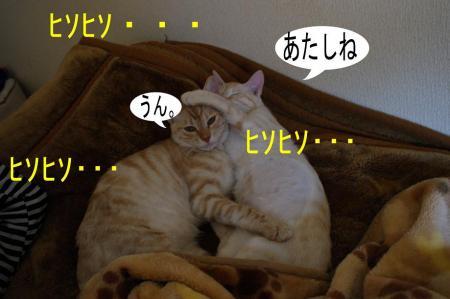 3_20090408225626.jpg