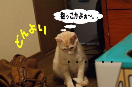 3_20090425194846.jpg