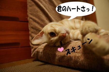 3_20090427195209.jpg