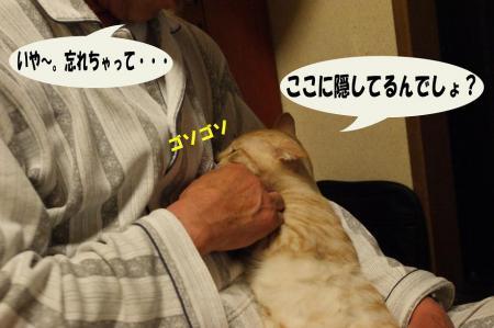 4_20090412132035.jpg