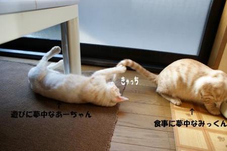 4_20090418092600.jpg