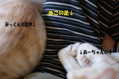 4_20090429105941.jpg