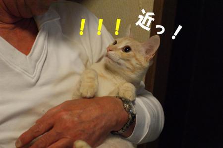 5_20090425194846.jpg