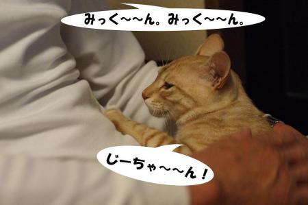 8_20090425194959.jpg