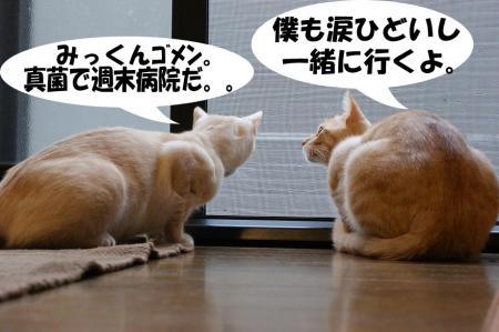 9_20090423191527.jpg