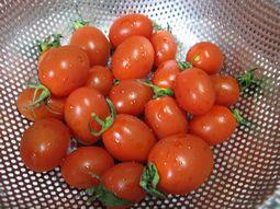 愛ちゃんプチトマト