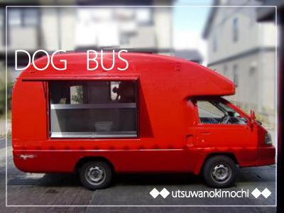 DOG-BUS.jpg